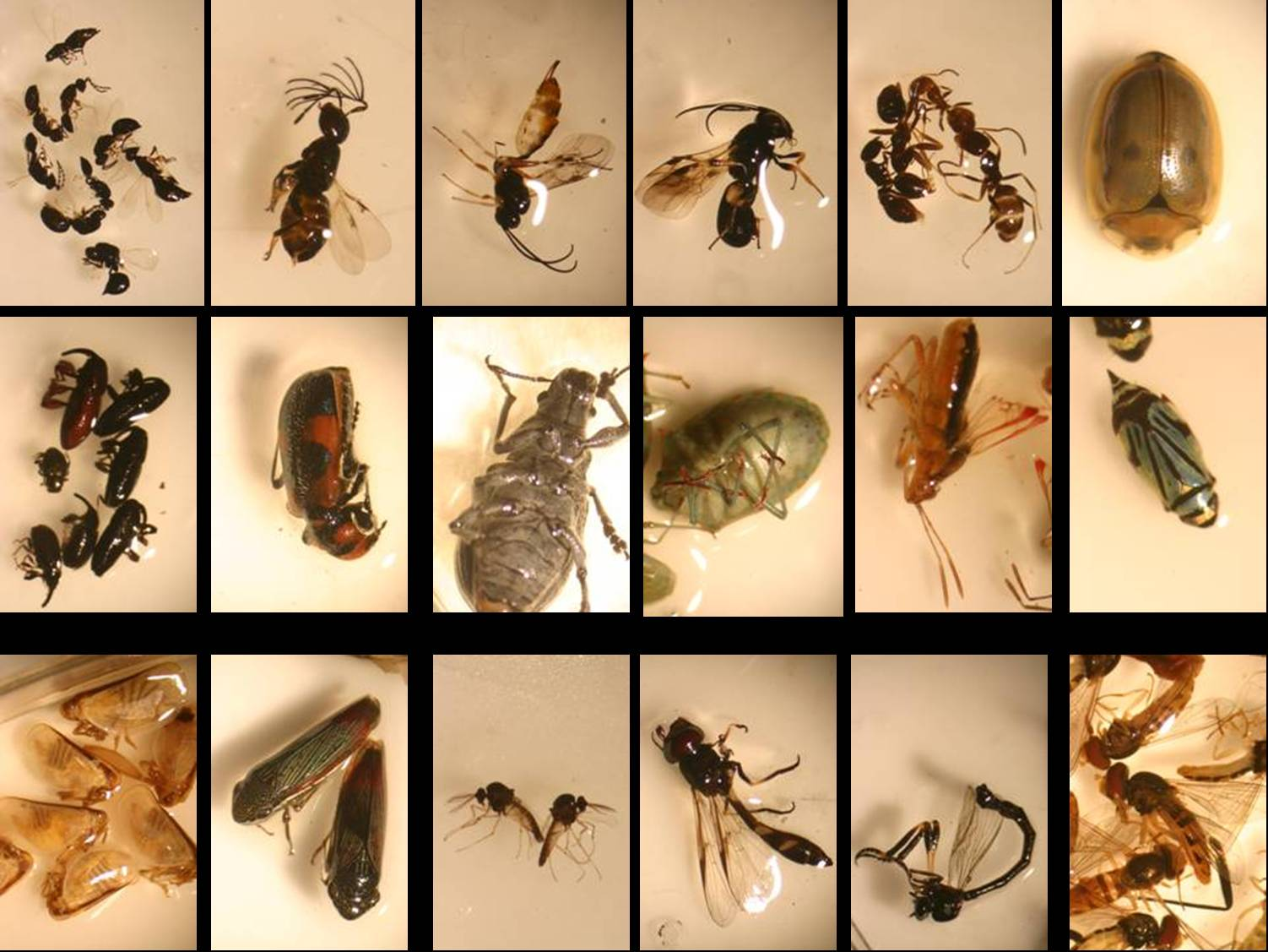General insects at Los Fresnos